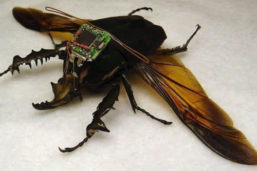 حشرات سایبری