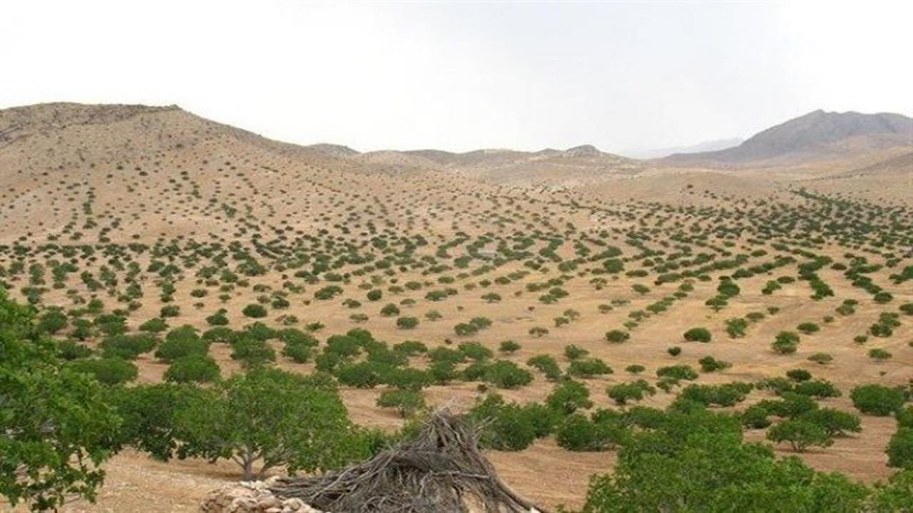 عملیات بذر کاری ۸۰ هکتار از پارک ملی ضامن آهو در جاجرم