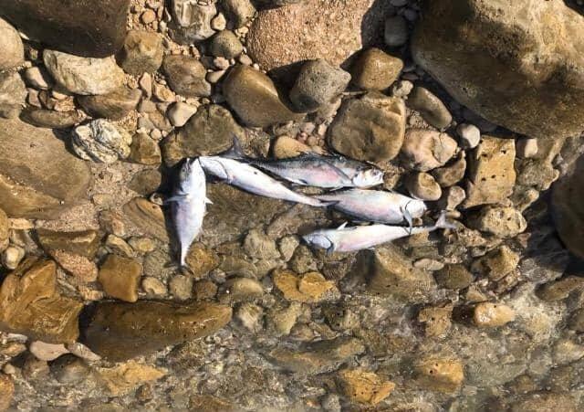 مرگ هزاران ماهی در خلیج فارس/ مرگ هزاران پرنده مهاجر به مرگ هزاران ماهی آبزی ختم شد