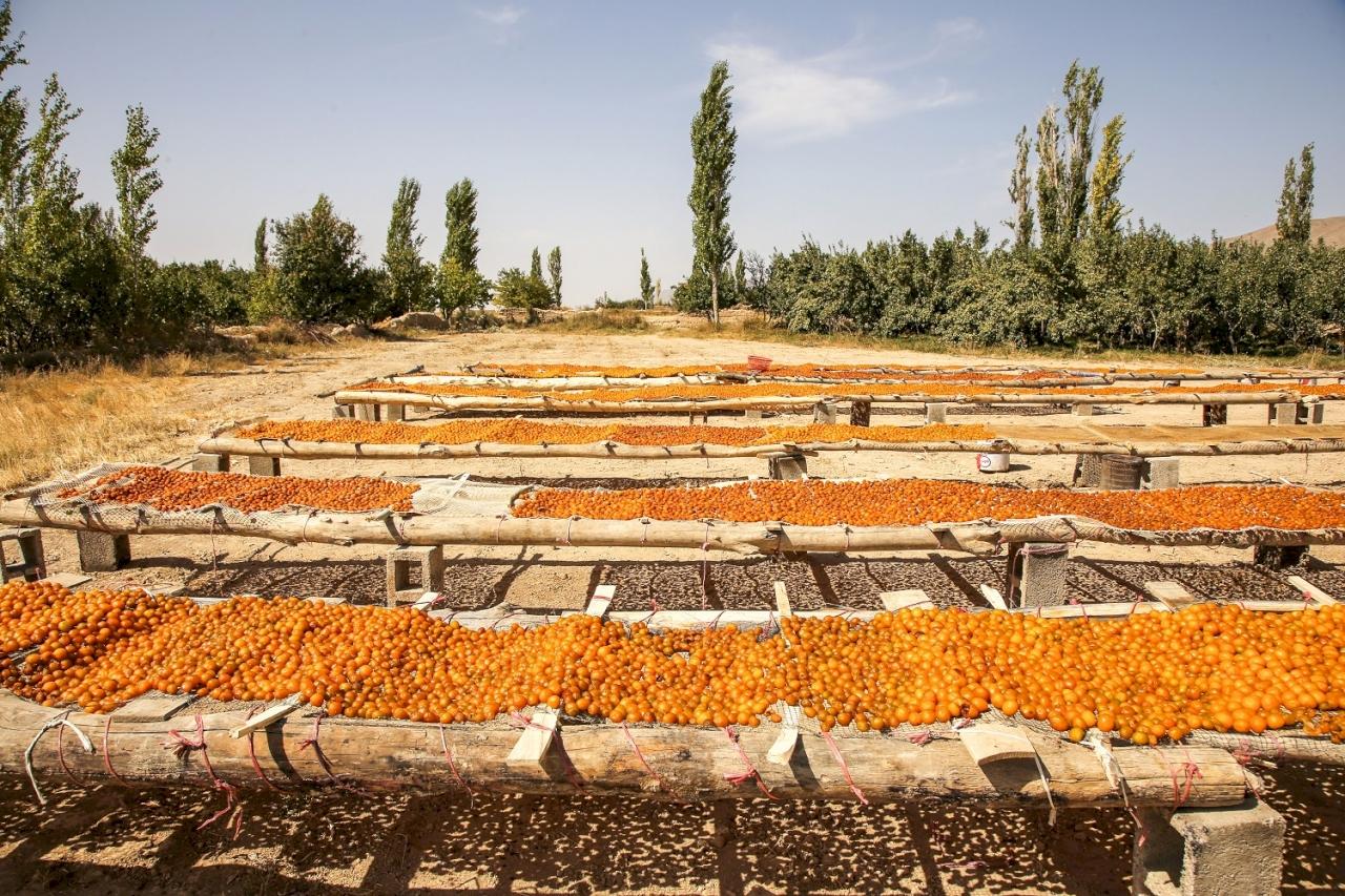 سوغات خراسان شمالی هم خوشمزه و هم ارگانیک / بهترین سوغات خراسان شمالی چیست؟