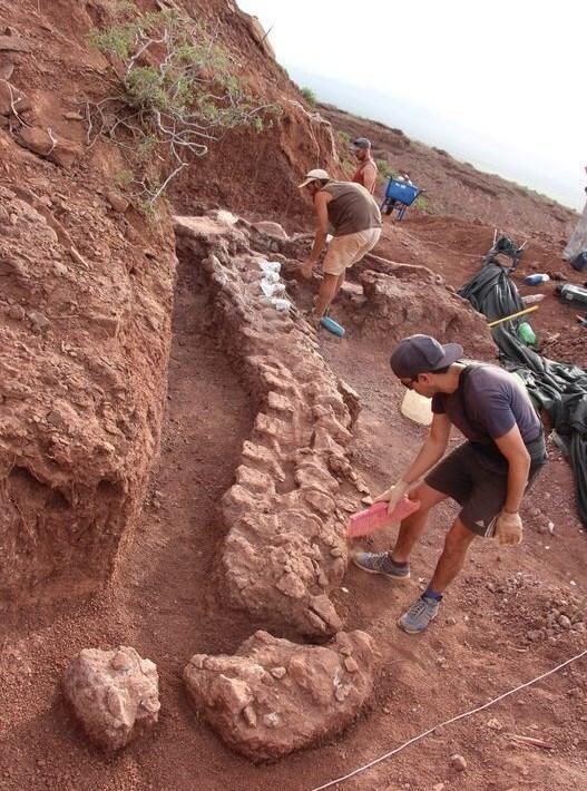 کشف بقایای قدیمیترین دایناسور موجود در کره زمین + تصاویر