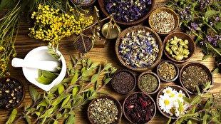 رنگین کمانی از گیاهان دارویی در کرانههای خاکی/ رونق زندگی با ضرب آهنگ سبزینگی!