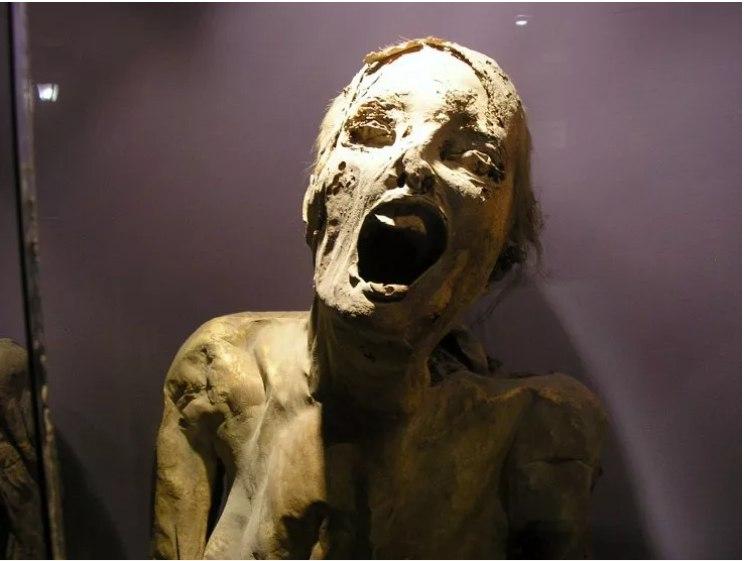 از شیر مرغ تا جان آدمیزاد در عجیبترین موزههای جهان + تصاویر
