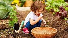 استانی که با تولد هر نوزاد یک درخت در آن کاشته میشود