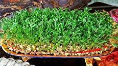 سبز کردن سبزه با عدس + طرز تهیه