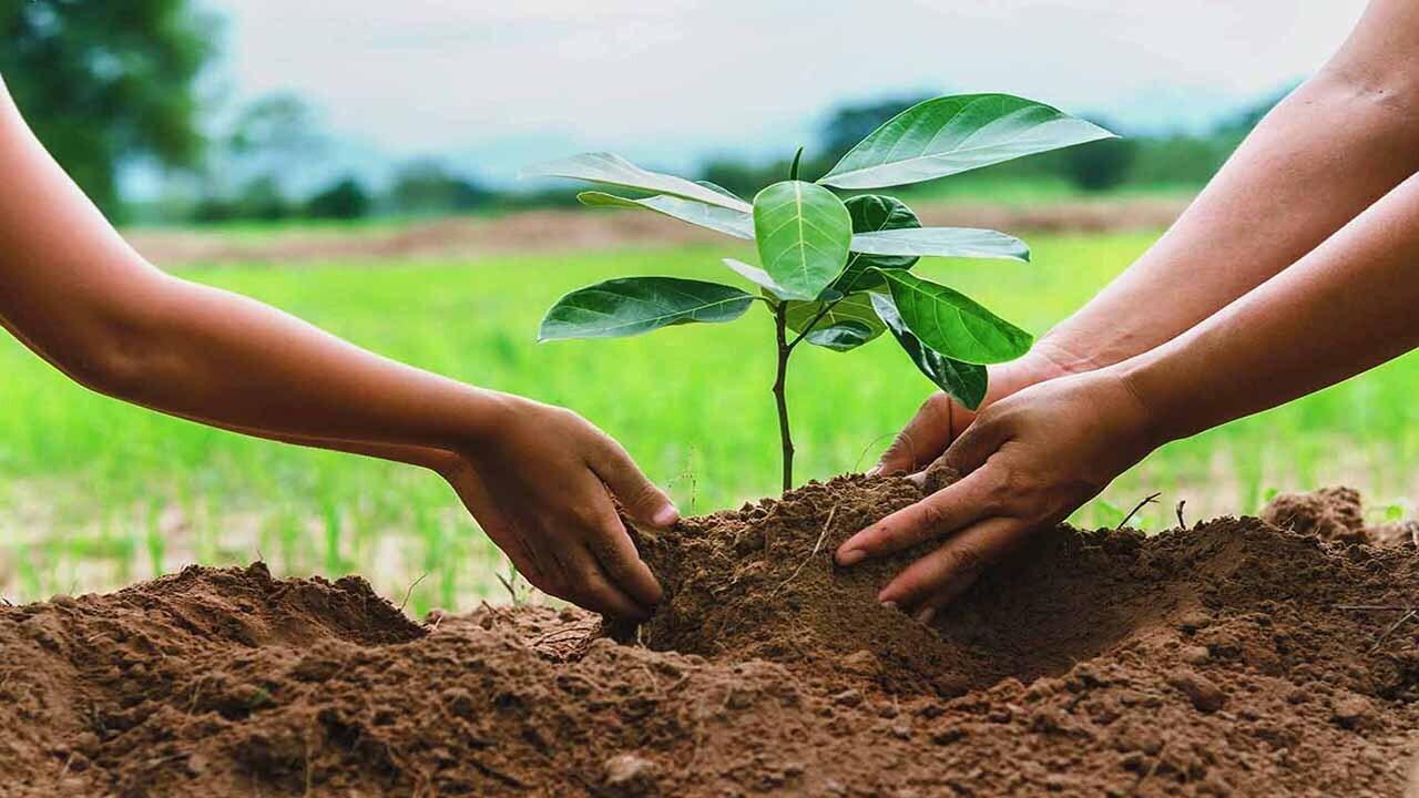 درخت بکاریم یا نکاریم؟