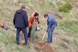 کاشت نهال به مناسبت روز درختکاری - وردیج