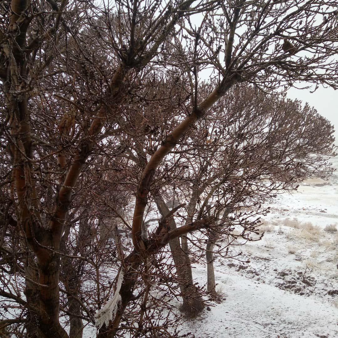 بارش برف در بخش رخ تربت حیدریه+ تصاویر