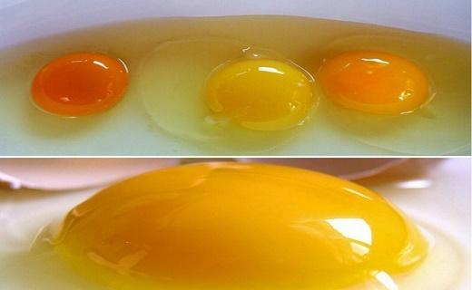 چه نوع تخم مرغی را برای مصرف انتخاب کنیم؟
