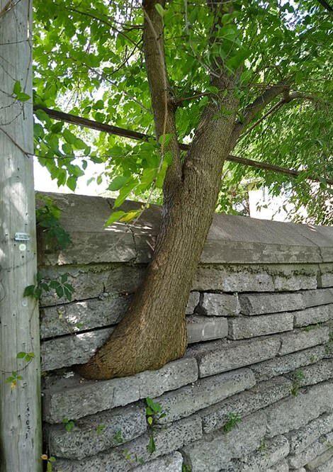 سازه های ساختمانی و فلزی پوشیده شده با برگ درختان + عکس