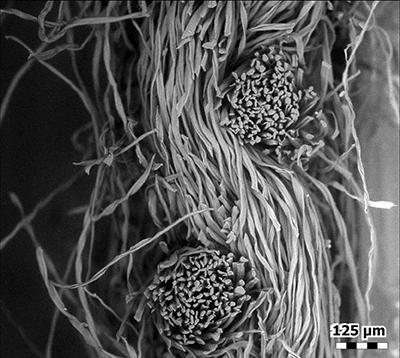 ماسکهای کرونا را با جزئیات زیر میکروسکوپ ببینید!