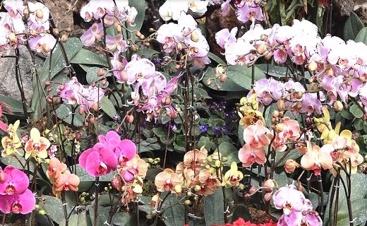 گیاهان کمیاب جهان را در نصف جهان ببینید+فیلم