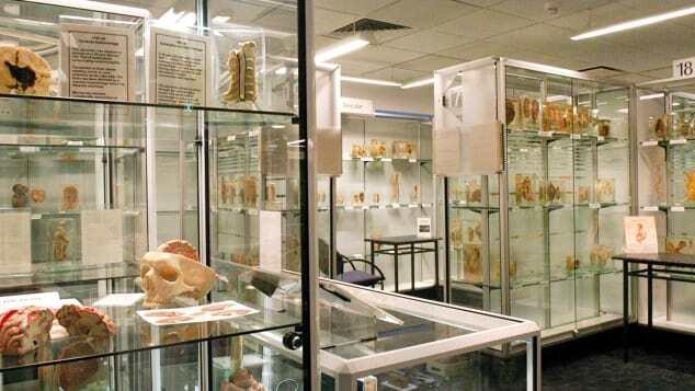 موزه استرالیا