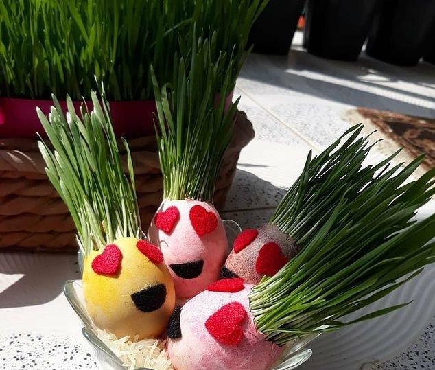 کاشت سبزه عید در کمترین زمان