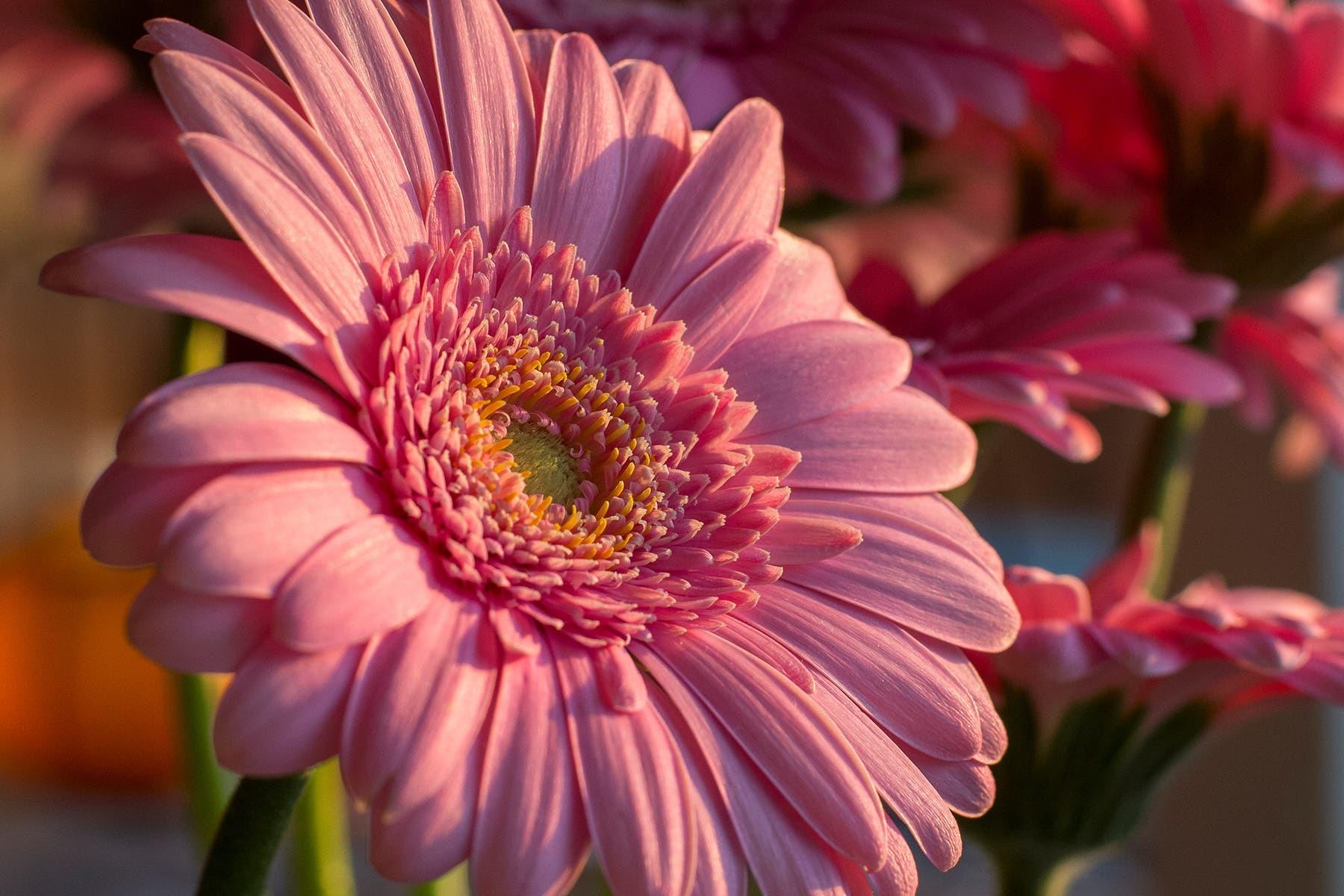 ۱۲ فایده گیاهان خانگی برای سلامتی