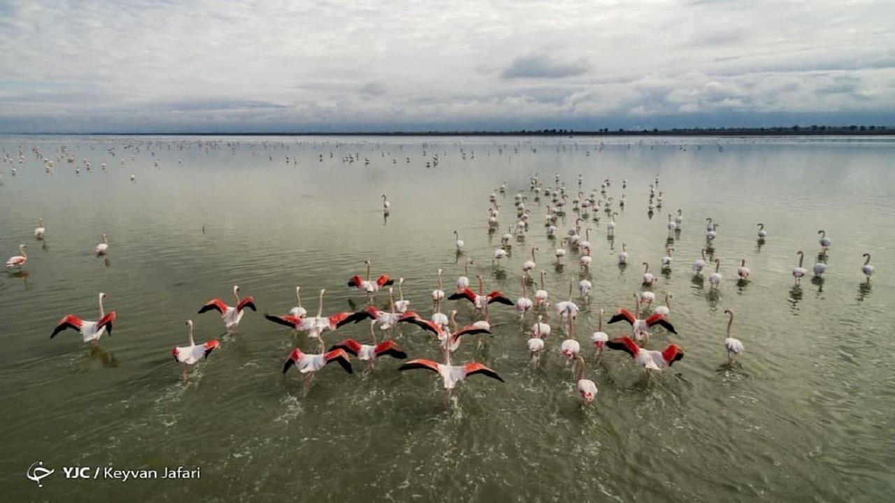 سازمان محیط زیست منشأ سموم تالاب میانکاله را شناسایی کند