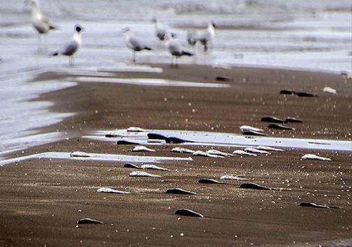 داستان ماهیهای تلف شده در ساحل عسلویه چه بود؟