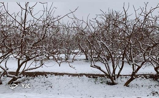 بارش برف و باران و خوشحالی مردم کویر یزد+ تصاویر