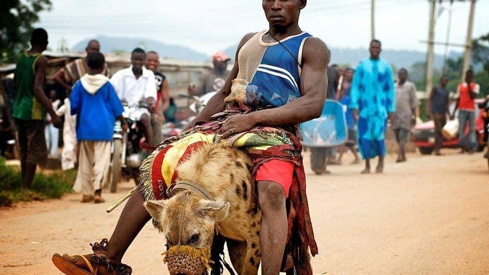 «مبارزه با کفتارها» راه و رسم عجیب قبیلهای در نیجریه+ تصاویر