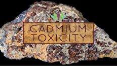 مسمومیت با کادمیوم؛ عنصری که میتواند جان شما را بگیرد