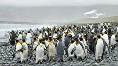 پنگوئن زرد رنگی که باعت تحیر جهانیان شد