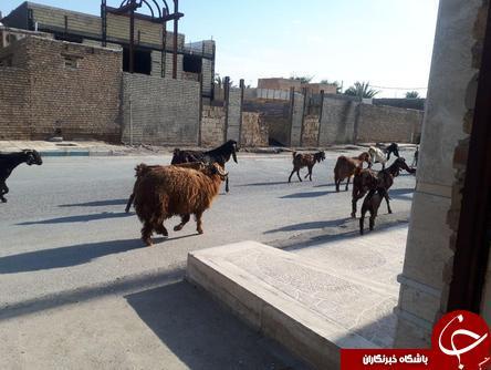 از کیف قاپی ناکام و دلخراش در خرمشهر تا انحراف عجیب پراید به داخل پیادهرو! + فیلم و تصاویر