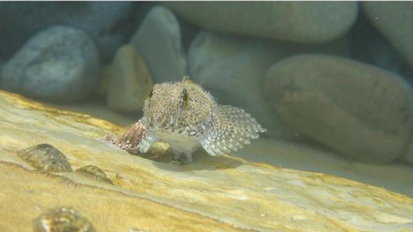 این ماهیها روی خشکی هم زنده میمانند! + تصاویر
