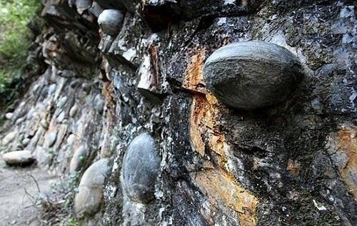صخره سنگی که هر ۳۰ سال تخم میگذارد + تصاویر