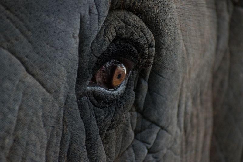 نگاه نافذ یک فیل + عکس