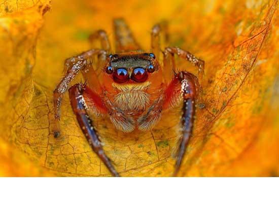 چشمان زیبای عنکبوت + تصاویر