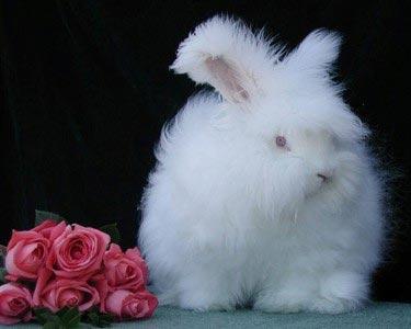 عجیبترین خرگوش دنیا + تصاویر