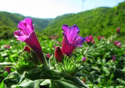 گیاهان دارویی، ارمغانی از دل طبیعت خوزستان که ارزآوری می کنند