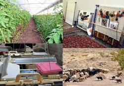 پرداخت بیش از ۲۳ میلیارد تومان تسهیلات اشتغالزایی به روستاییان اسدآباد