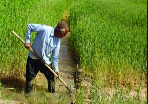 روزهای خوش کشاورزان خراسان جنوبی در بهار بارانی / رونق دیمکاری بعد از ۱۸ سال خشکسالی