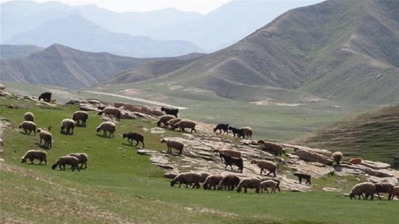 طرحهای مرتع داری استان سمنان بیمه شدند