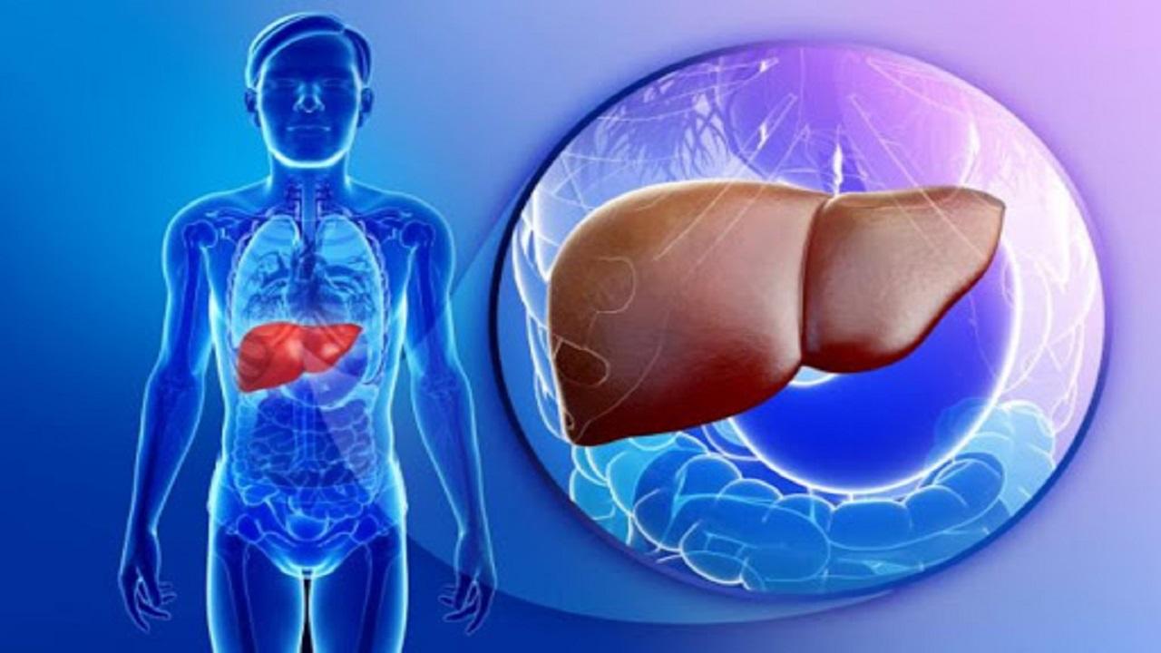 کبد چرب با مصرف کدام غذاها بروز میکند؟/ راهکارهای درمانی برای بهبود بیماری کبد چرب