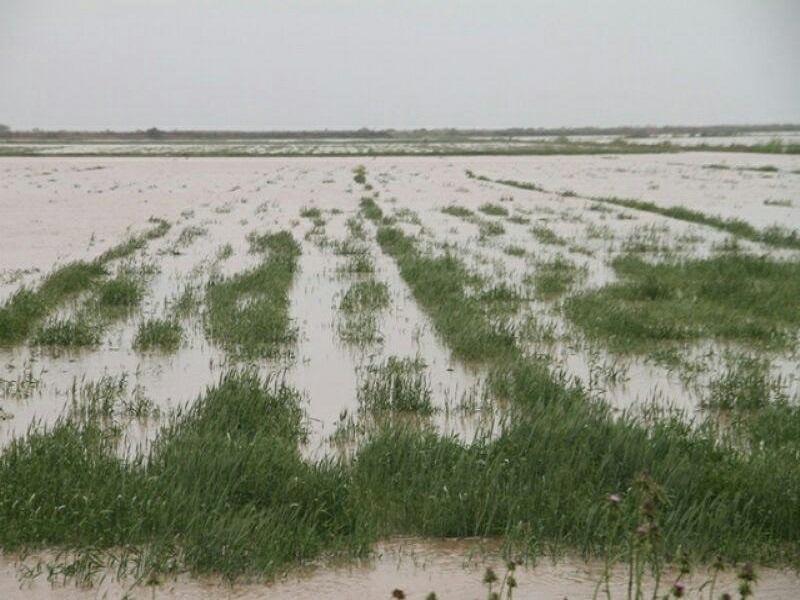 پرداخت ۵۵ میلیارد ریال تسهیلات خسارت سیل به بخش کشاورزی مراغه