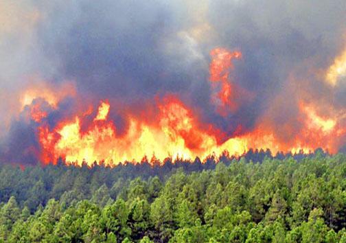 از زنده سوختن حیوانات جنگلی تا مهار آتشسوزی جنگلها با بیل!