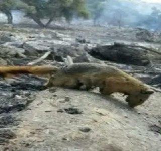آتش به منطقه حفاظت شده خائیز رسید/ نفس حیات وحش به شمارش افتاد+تصاویر