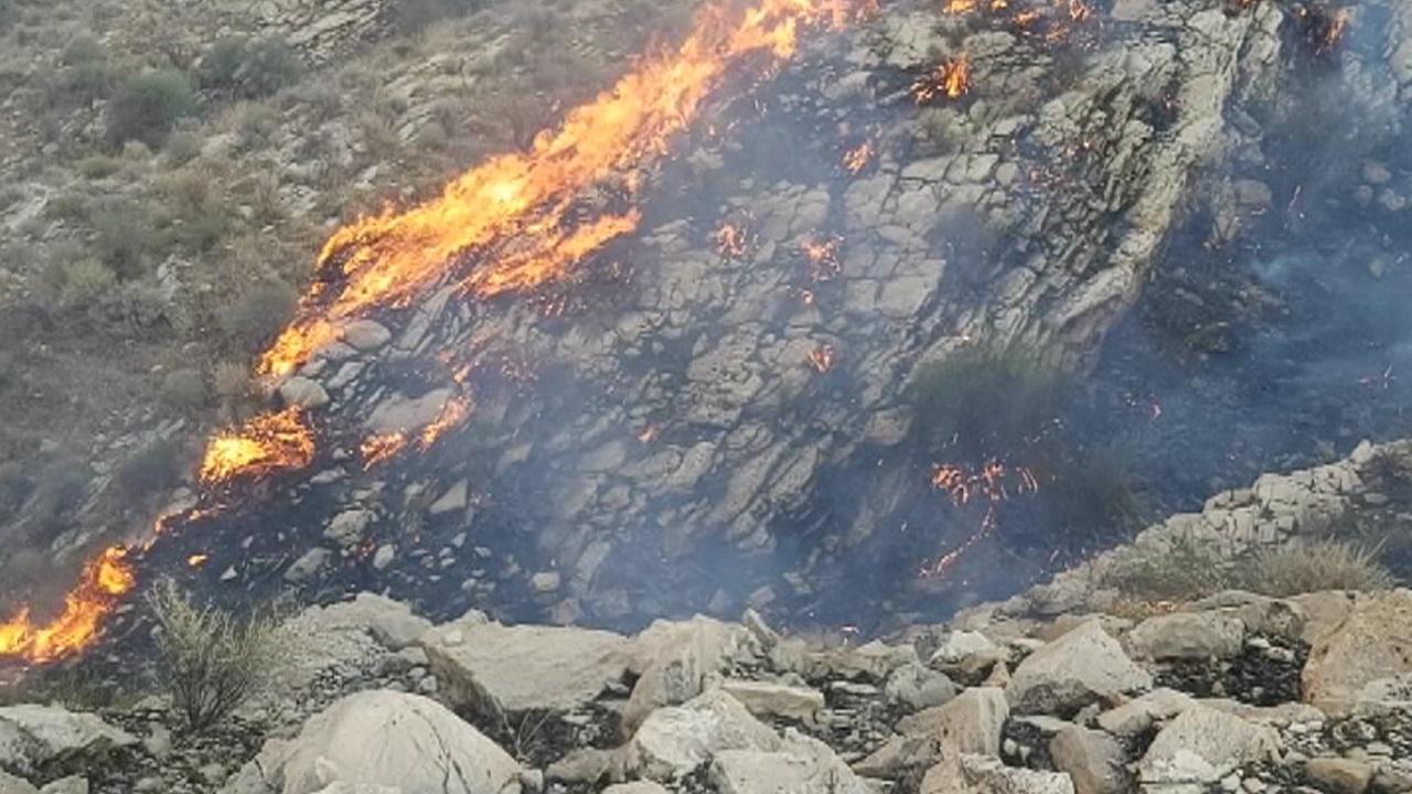 وقتی آتش دامن مراتع بوشهر را رها نمیکند