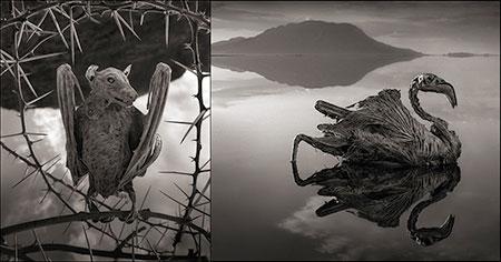 دریاچه ناترون، دریاچهای اسرارآمیز در آفریقا
