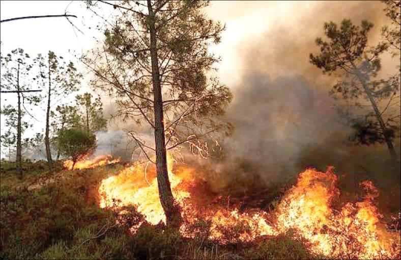 گلایه محیط زیست از نداشتن بالگردهای مخصوص اطفای حریق جنگل