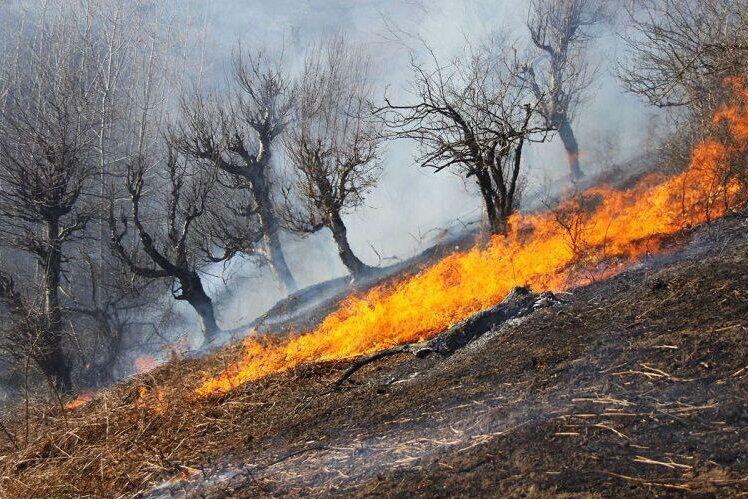 ۲ هکتار از مزارع کشاورزی در ملکشاهی طعمه حریق شد