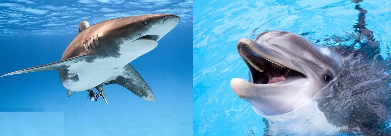 تفکر کوسه ای یا دلفینی داشته باشیم؟!