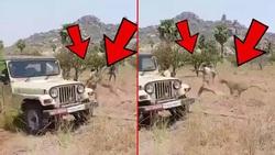 لحظه وحشتناک حمله پلنگ به مامور جنگلبانی!