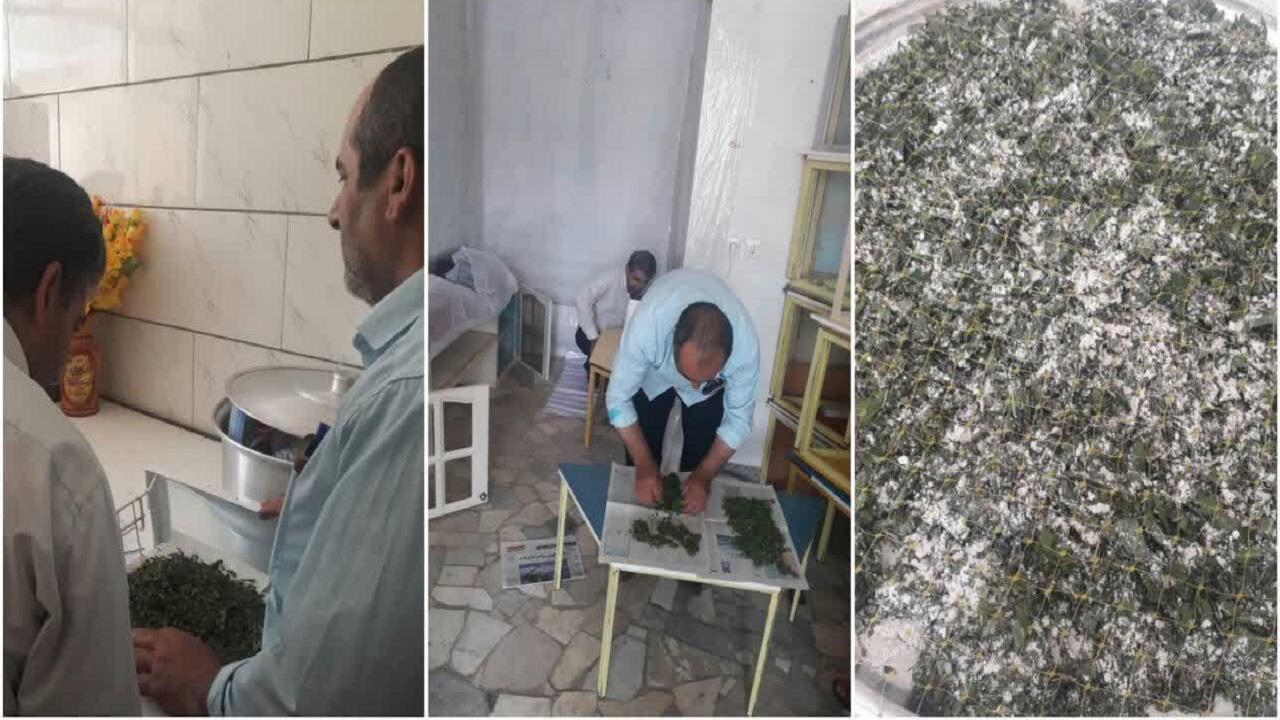 تحویل ۵۰ هزار کرم ابریشم به متقاضیان در بن