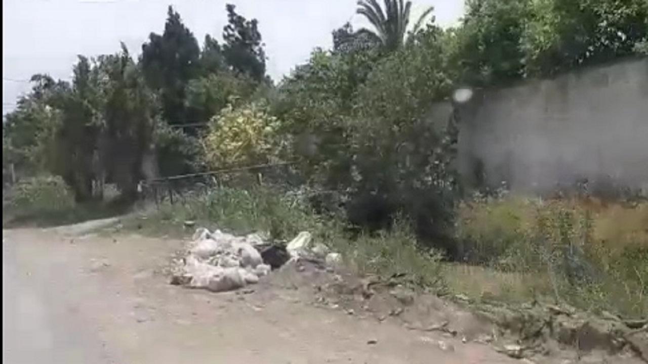 زبالههایی که در معابر روستای «علیآباد» جا خوش کردند! + فیلم