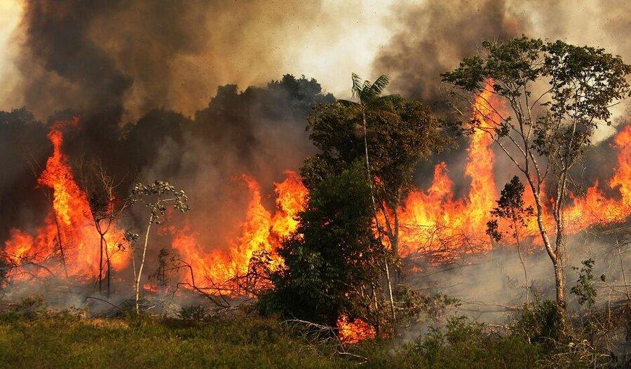 آتش سوزی جنگلهای زاگرس توسط نمایندگان مجلس پیگیری میشود
