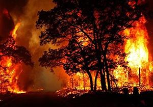 آتش سوزی در جنگل چیتگر