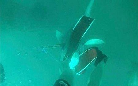 جدال دیدنی شکارچی با کوسه گاو در زیر آب